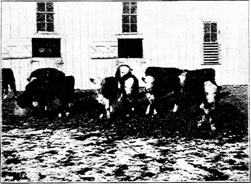 Herefords, and the breeding of Shorthorns started safely on the road to improvement, by rational breeding for practical results. The Scotch, which but recently