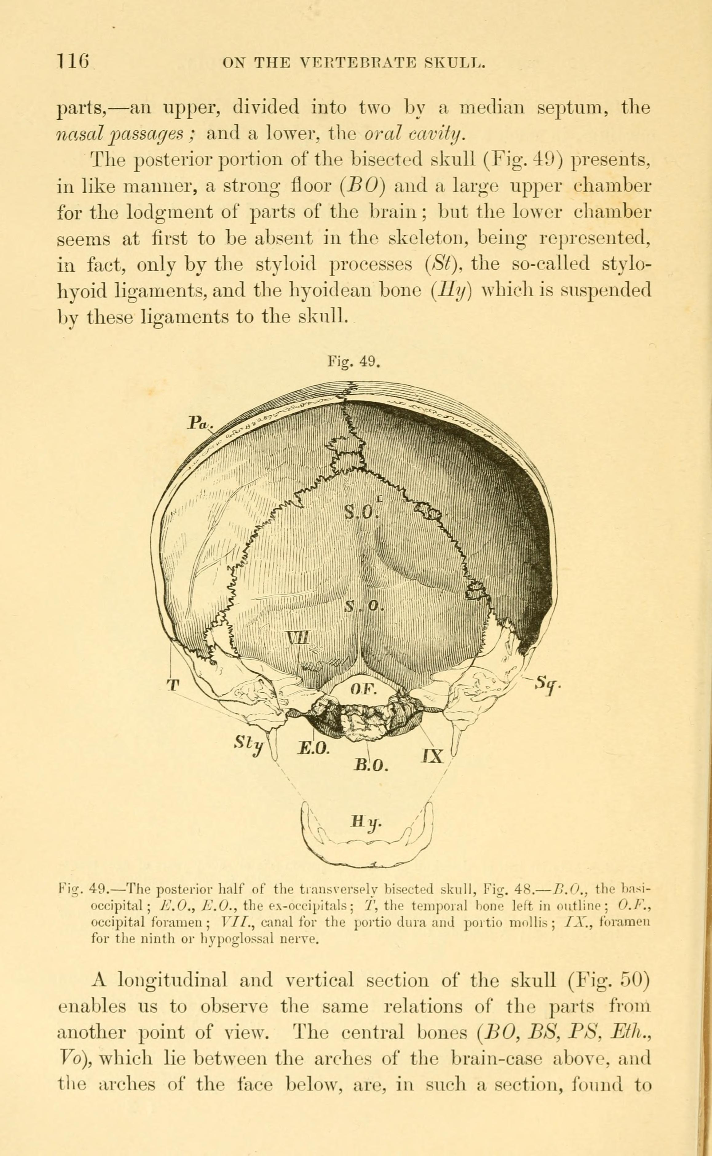 File:Lectures on the elements of comparative anatomy (Page 116 ...