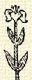 Liliom (heraldika, természetes).PNG