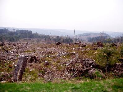 Schwarzwald nach Lothar am 29.04.04