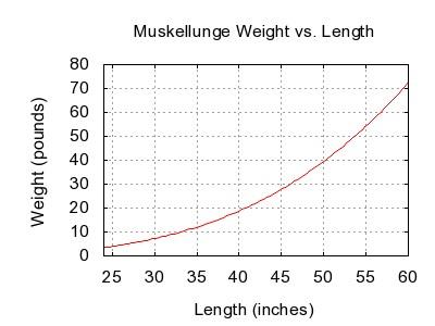 Muskellunge weight length graph.jpg