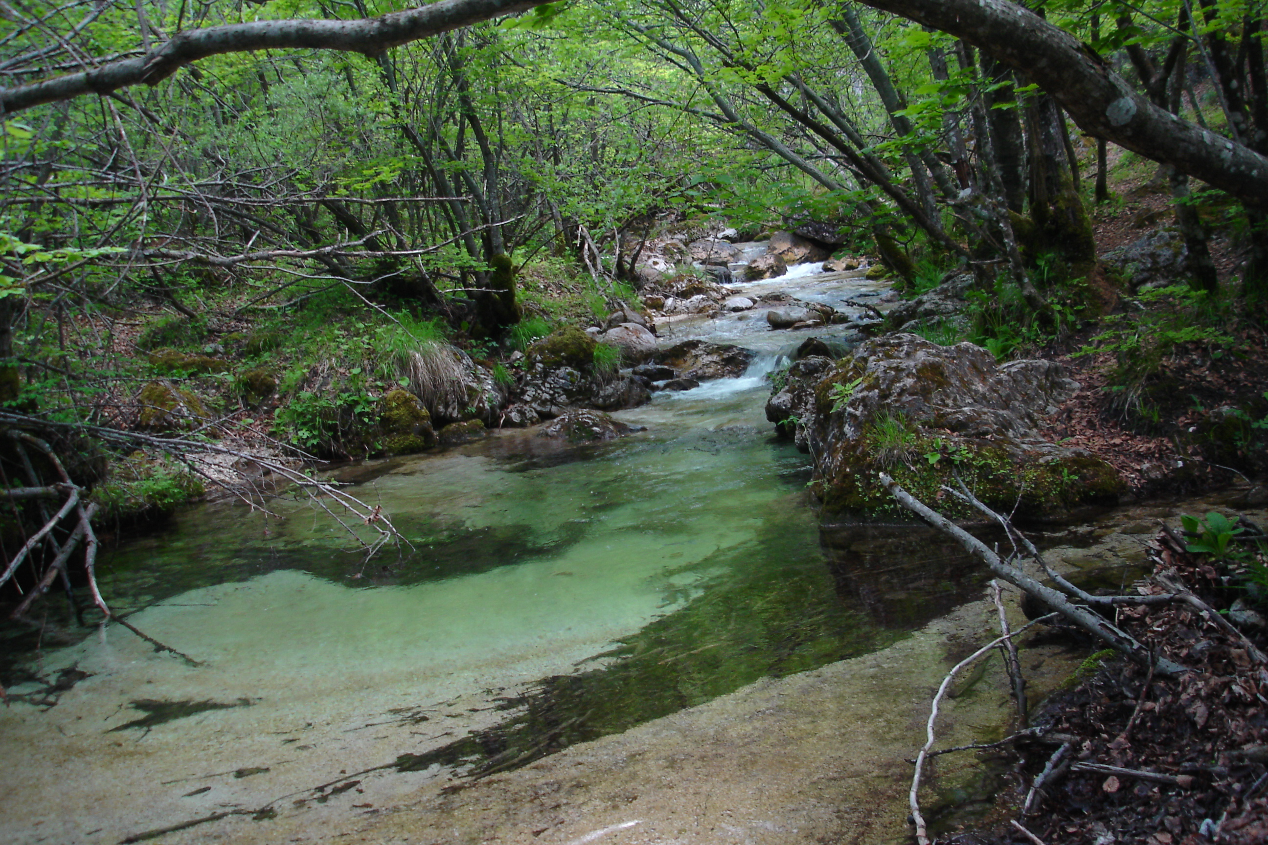 Image result for Abruzzo, Lazio and Molise National Park