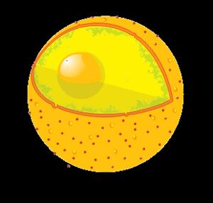 Description Nucleus pngNucleus Clipart