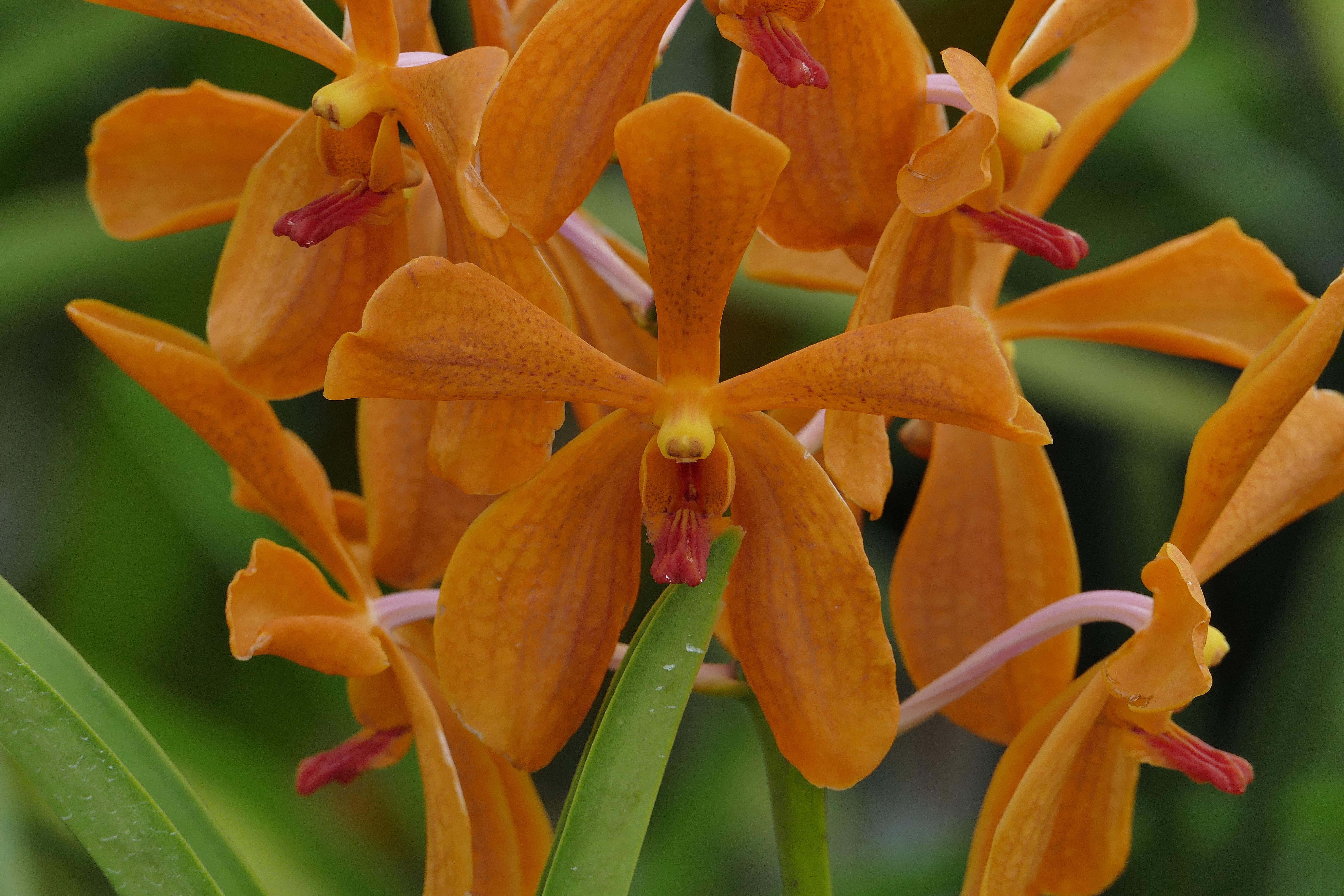 File:Orchid in Golden Garden 3.jpg - Wikimedia Commons