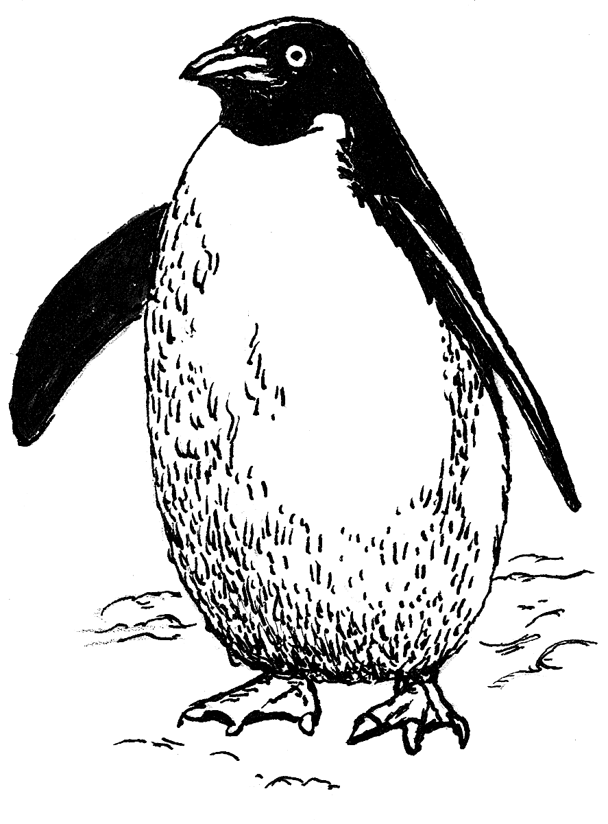 Penguin Coloring Pages For Toddlers