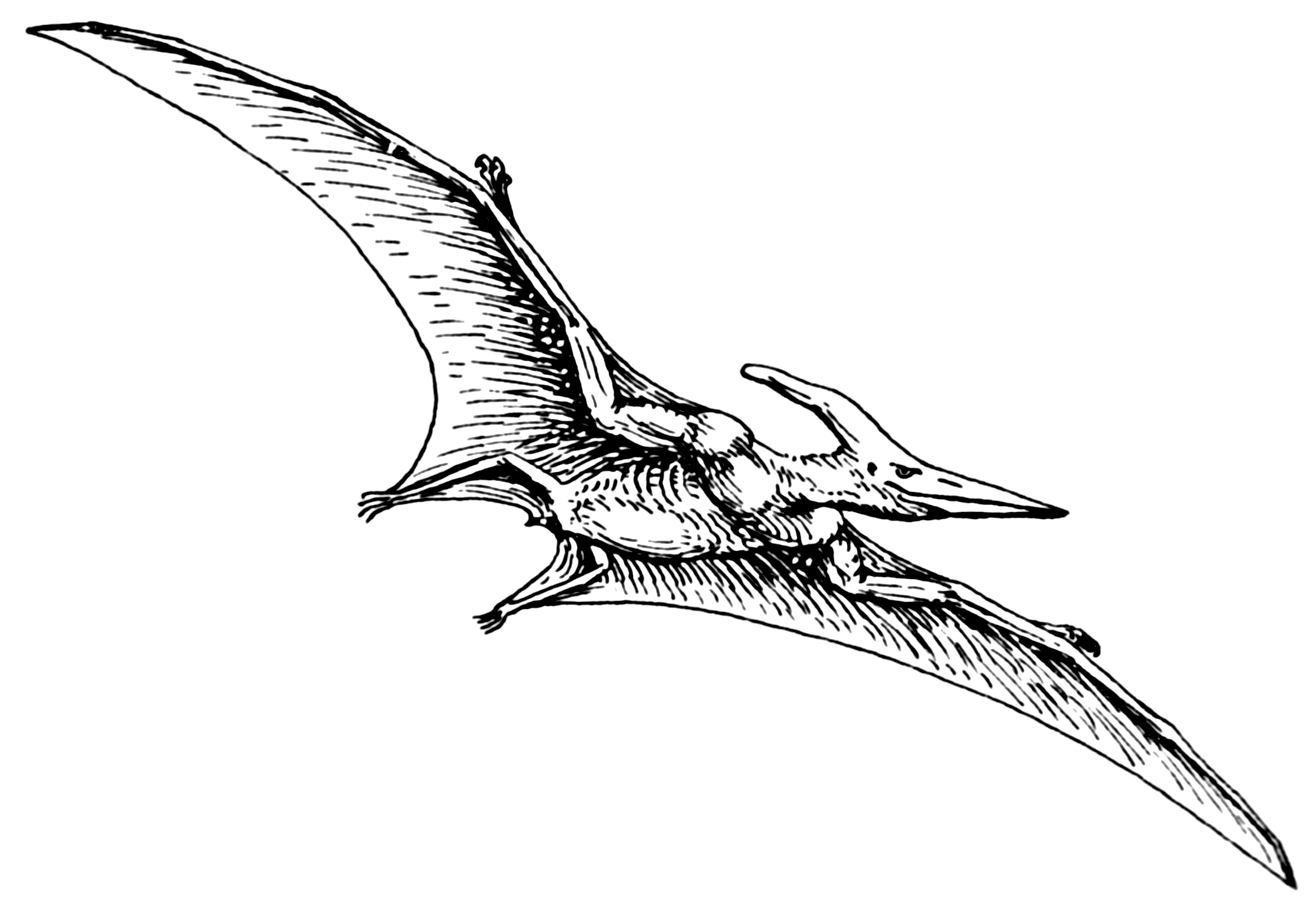 file pterodactyl psf png wikimedia commons