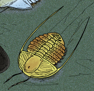 <i>Pytine</i> Extinct genus of trilobites