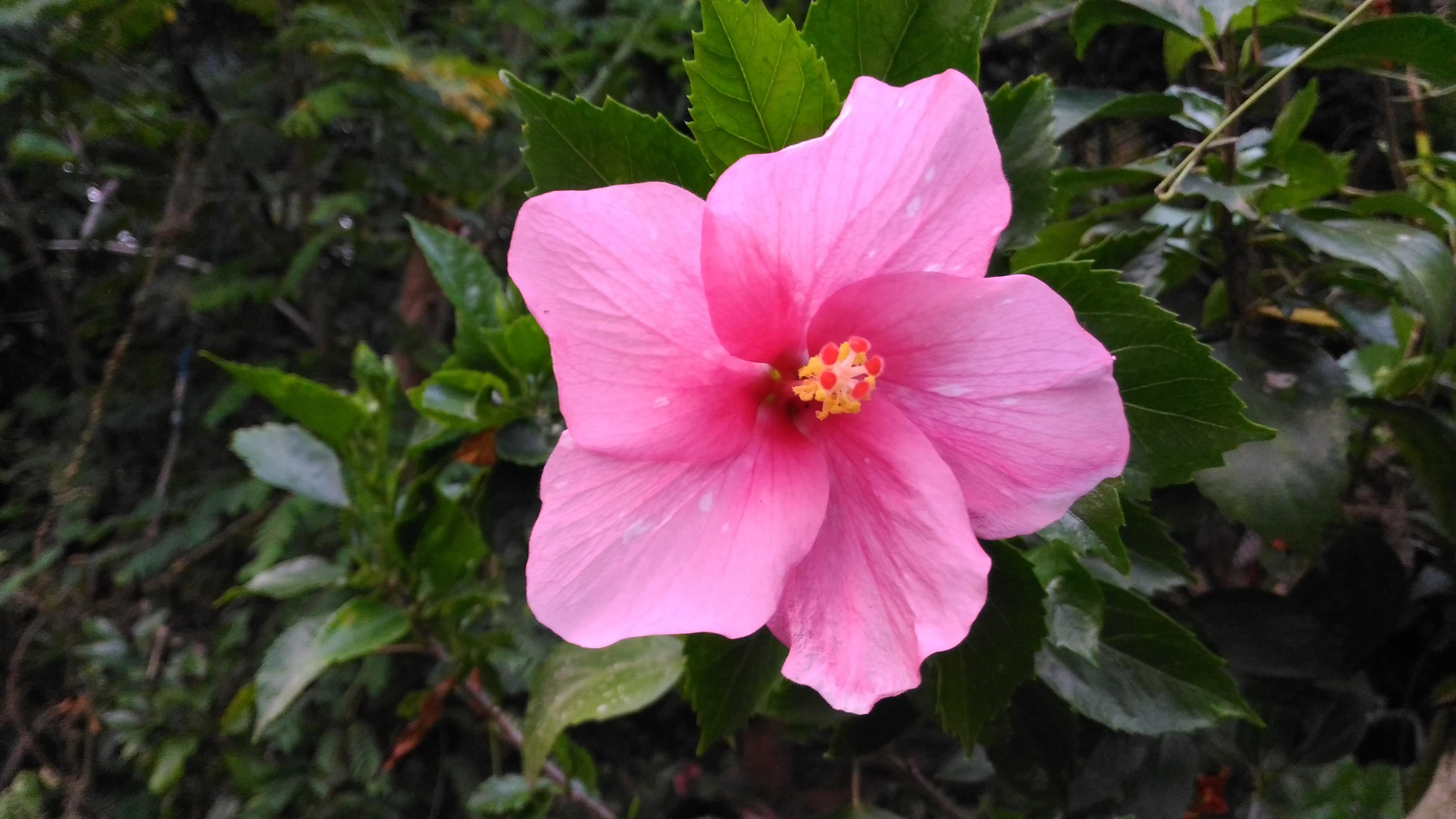 Fileshoe Flower From Keralajpg Wikimedia Commons