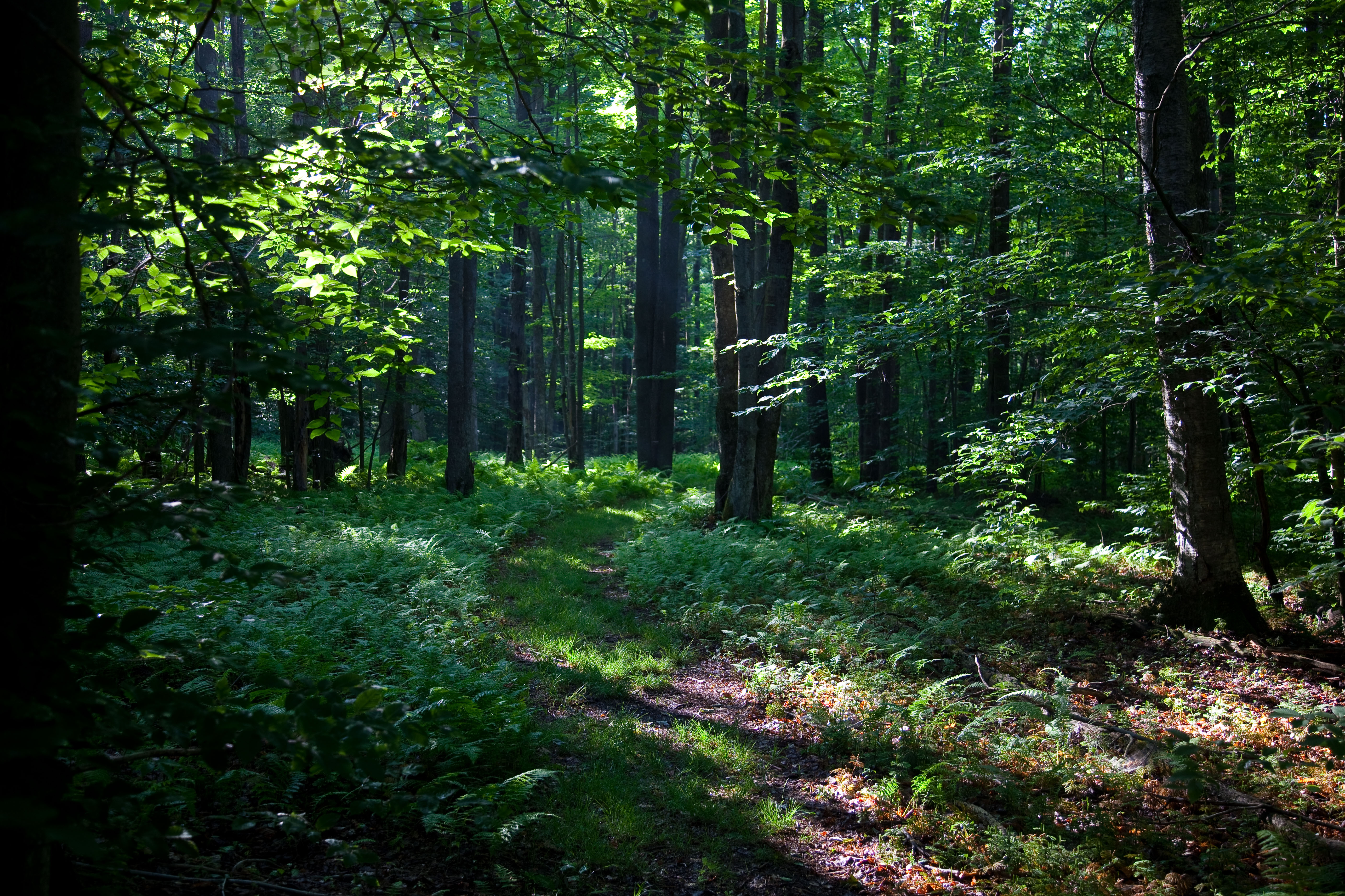 File Spring Sunshine Walking Trail West Virginia