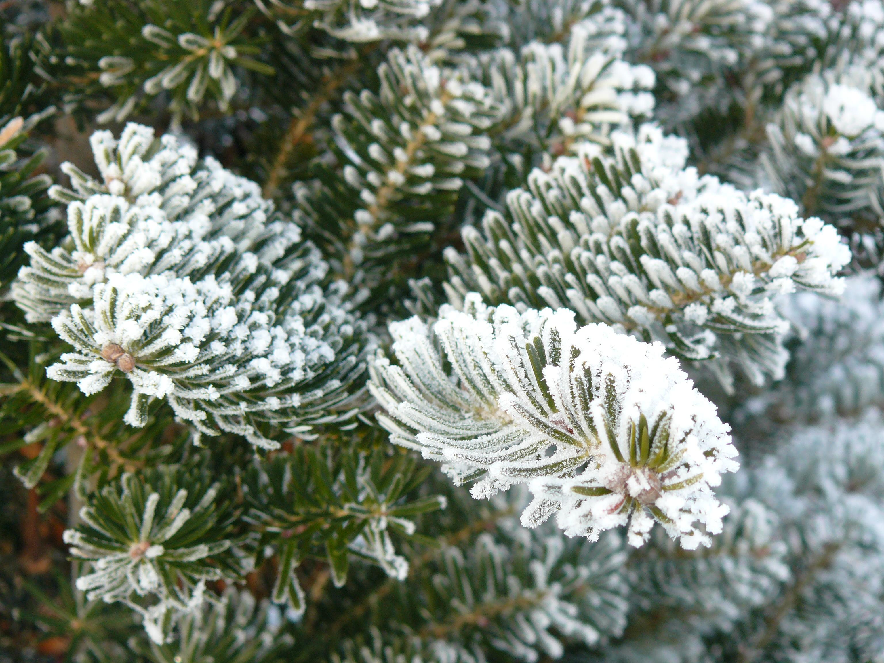 Christmas Tree Holder