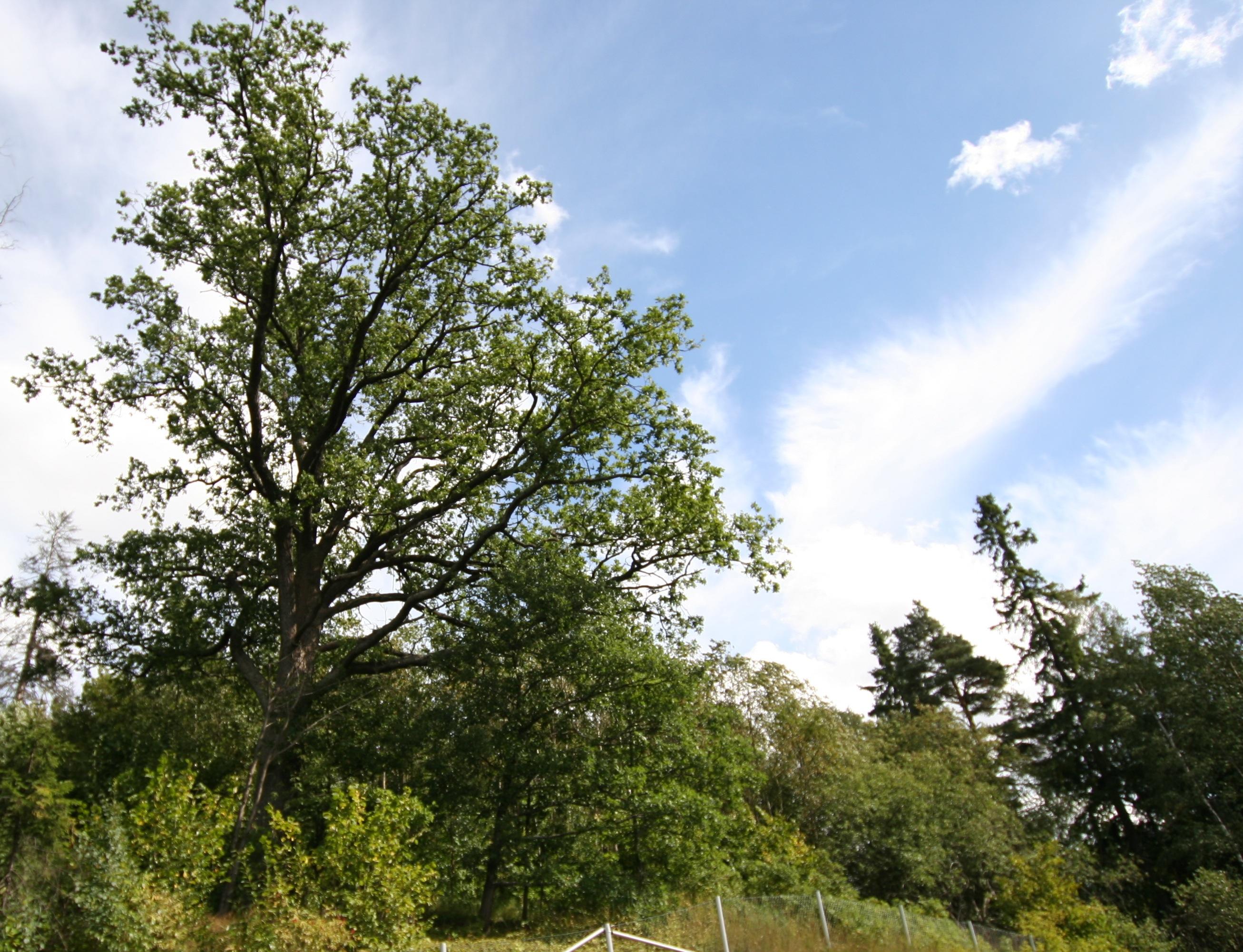 Tammiston Luonnonsuojelualue Wikipedia