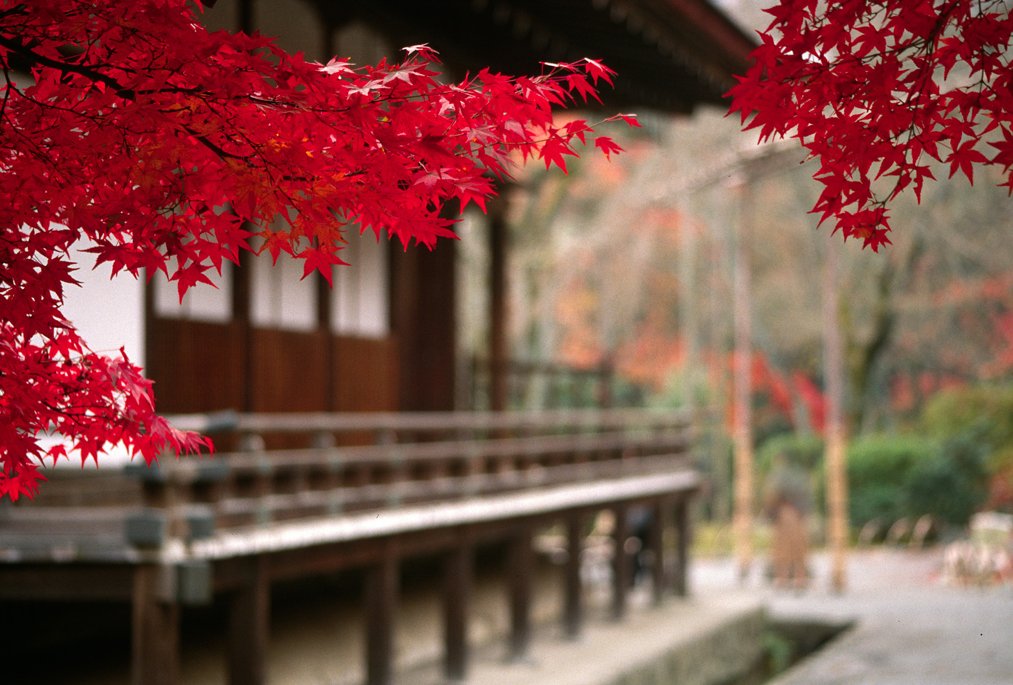Japan wallpapers and images japanese temple scenery for Oriental wallpaper