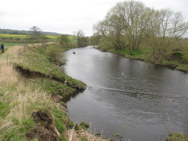 The Wharfe below Harewood - geograph.org.uk - 770111