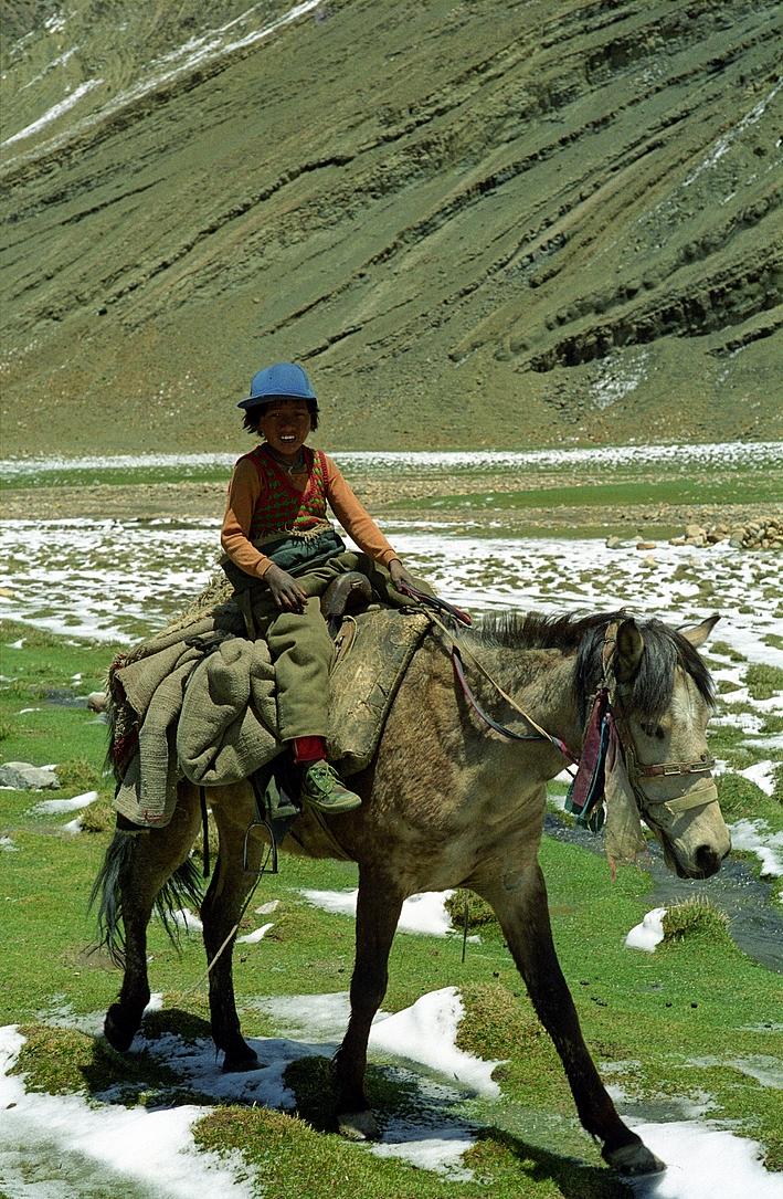 tibetan pony wikipedia