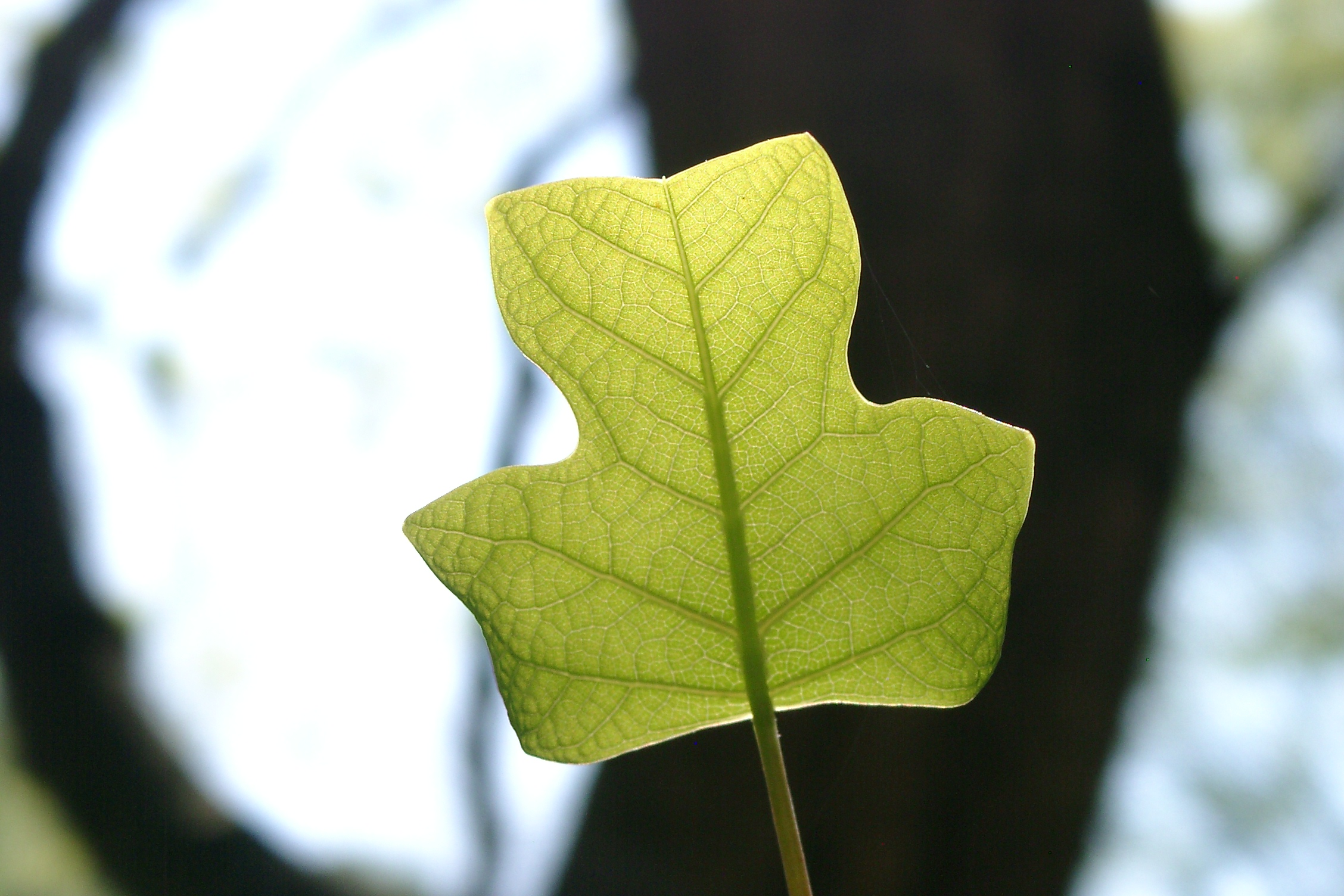 Стоит обратить внимание листья