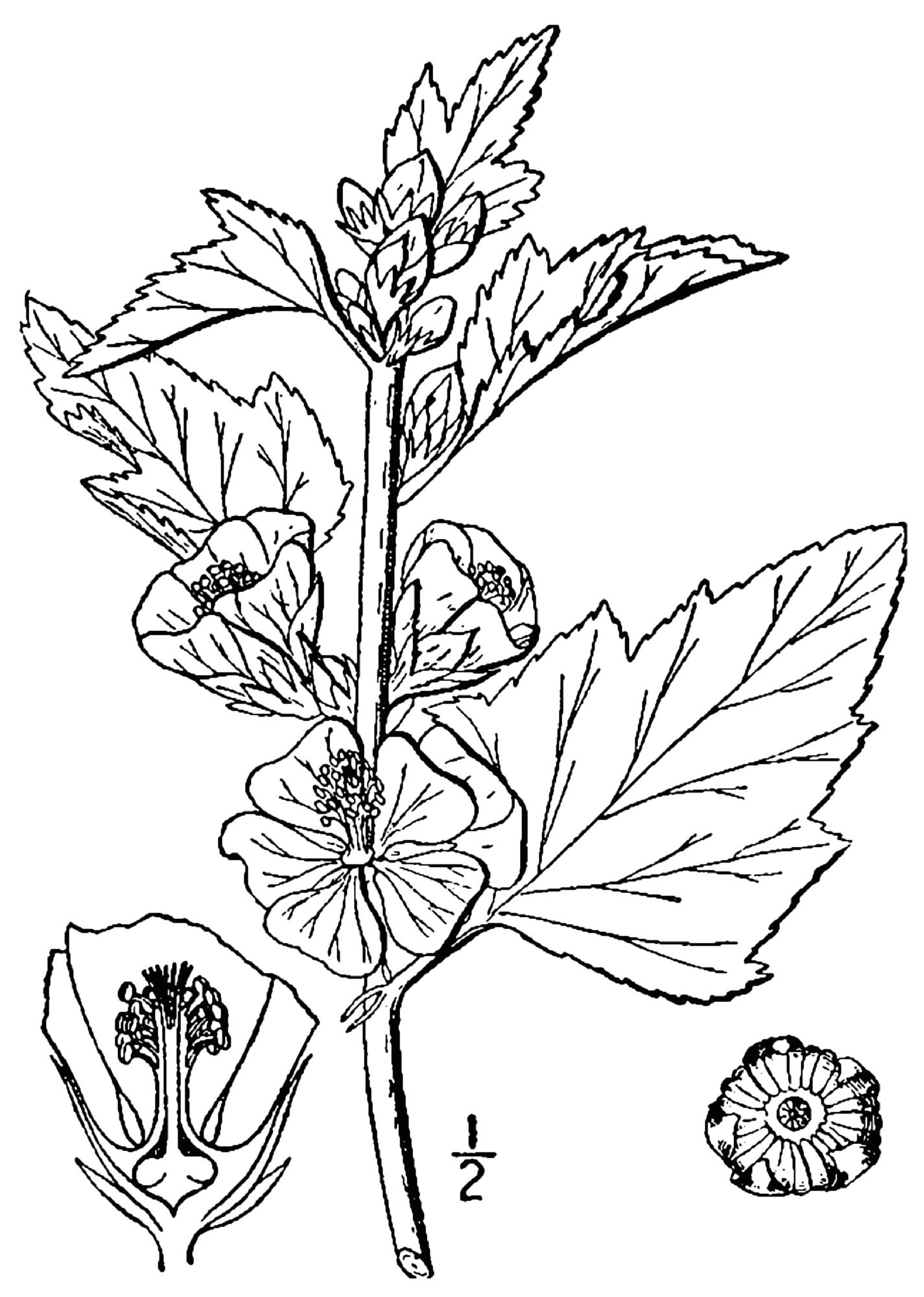 кошке лечебный цветок рисунок жучки могут