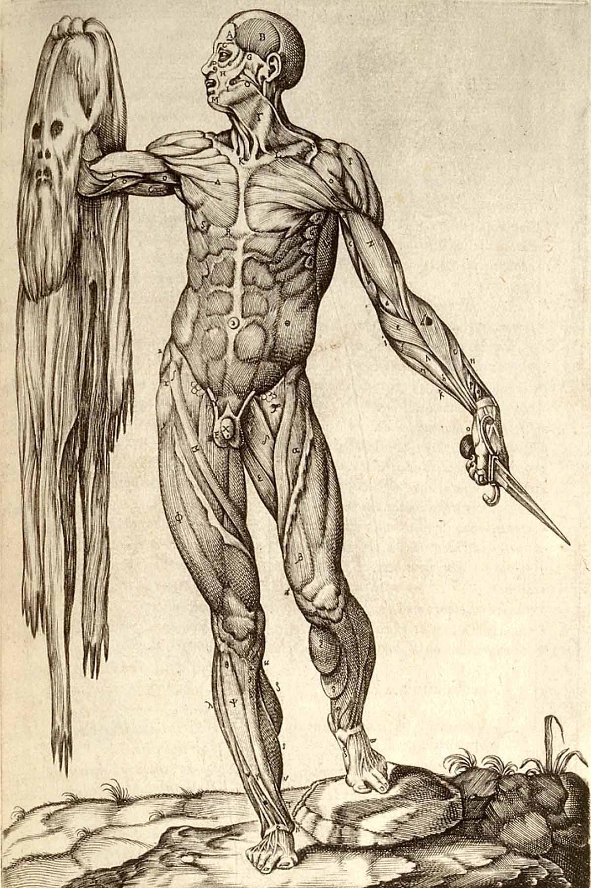 Anatomía humana [imagenes + video] - Info - Taringa!