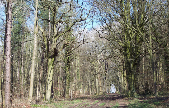 Broad Footpath into Grovely Woods - geograph.org.uk - 302090
