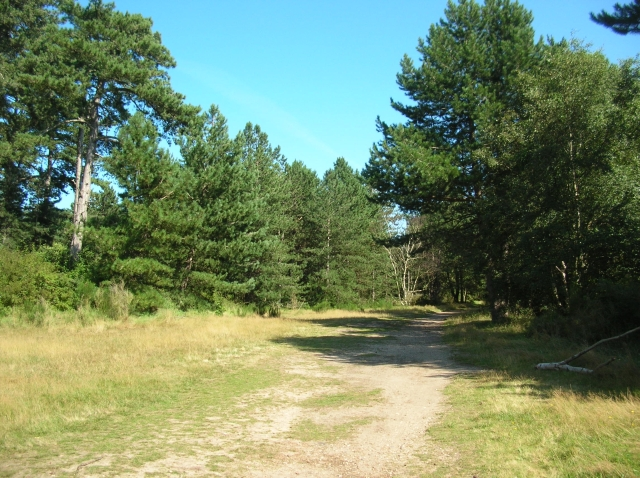 Clearing in Holkham Meals - geograph.org.uk - 544081