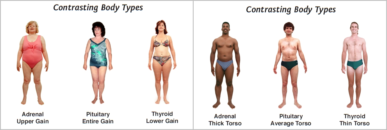 Examples of differences between body types