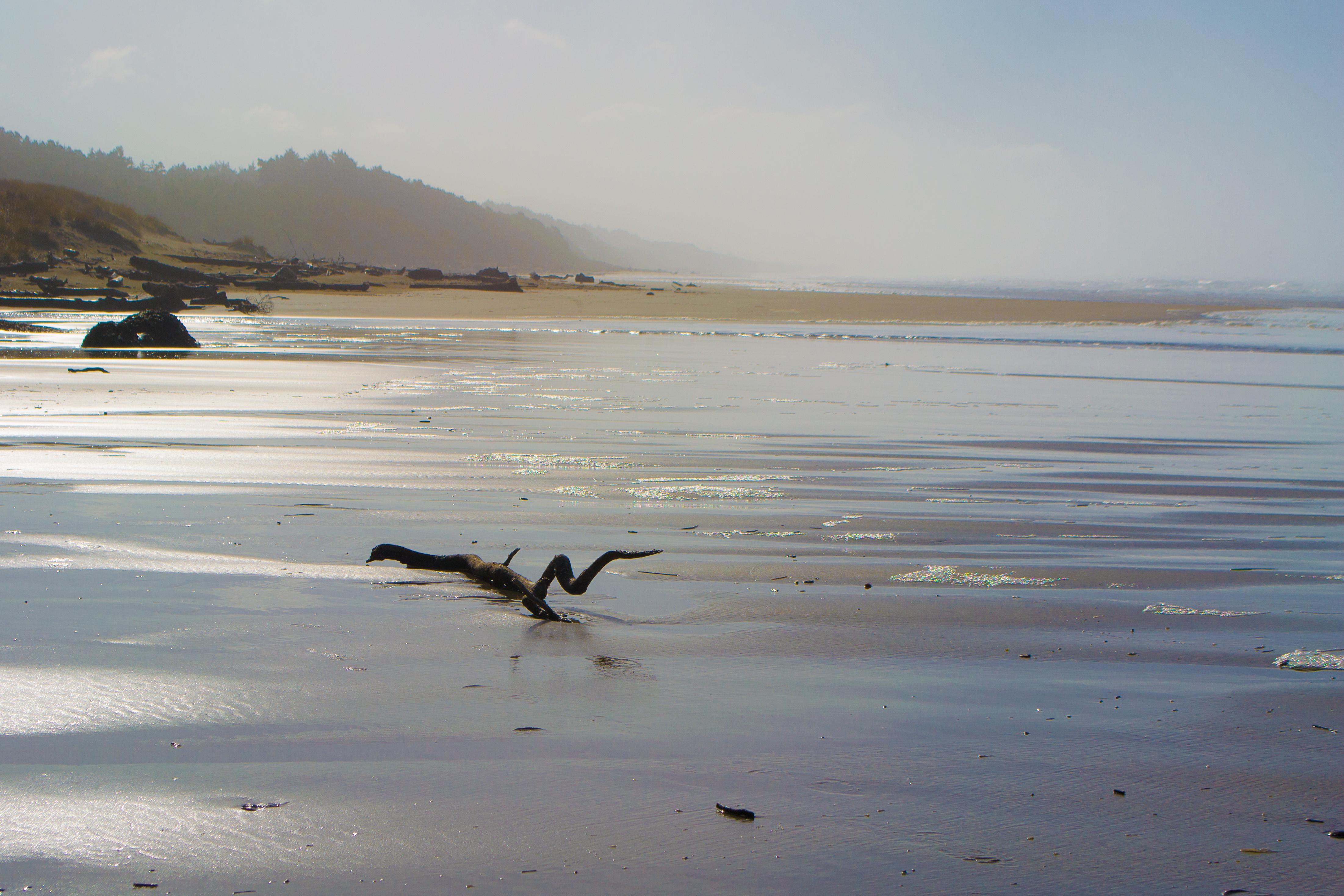 File Driftwood Beach Oregon Jpg