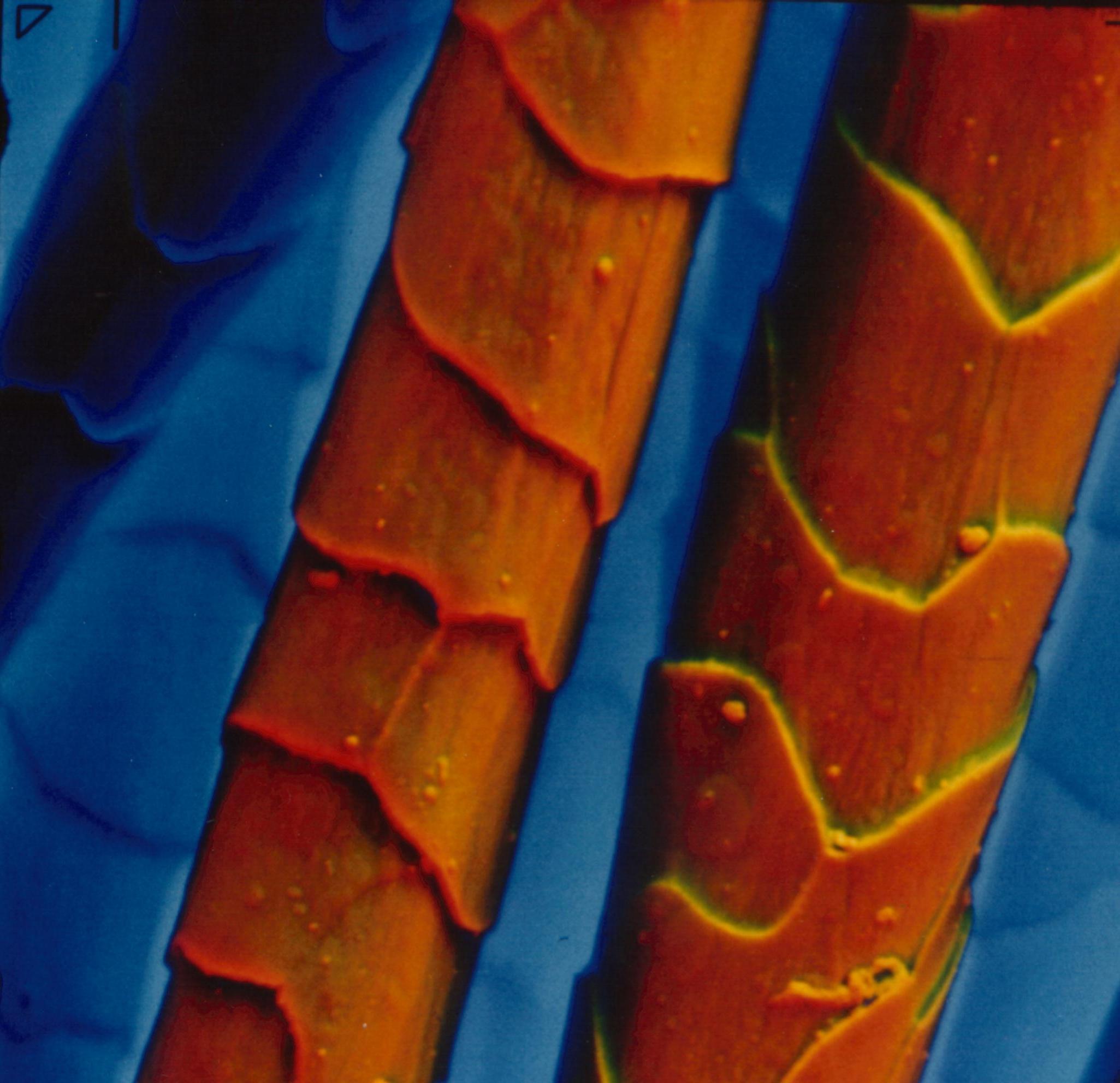 History of Microscopy Essay