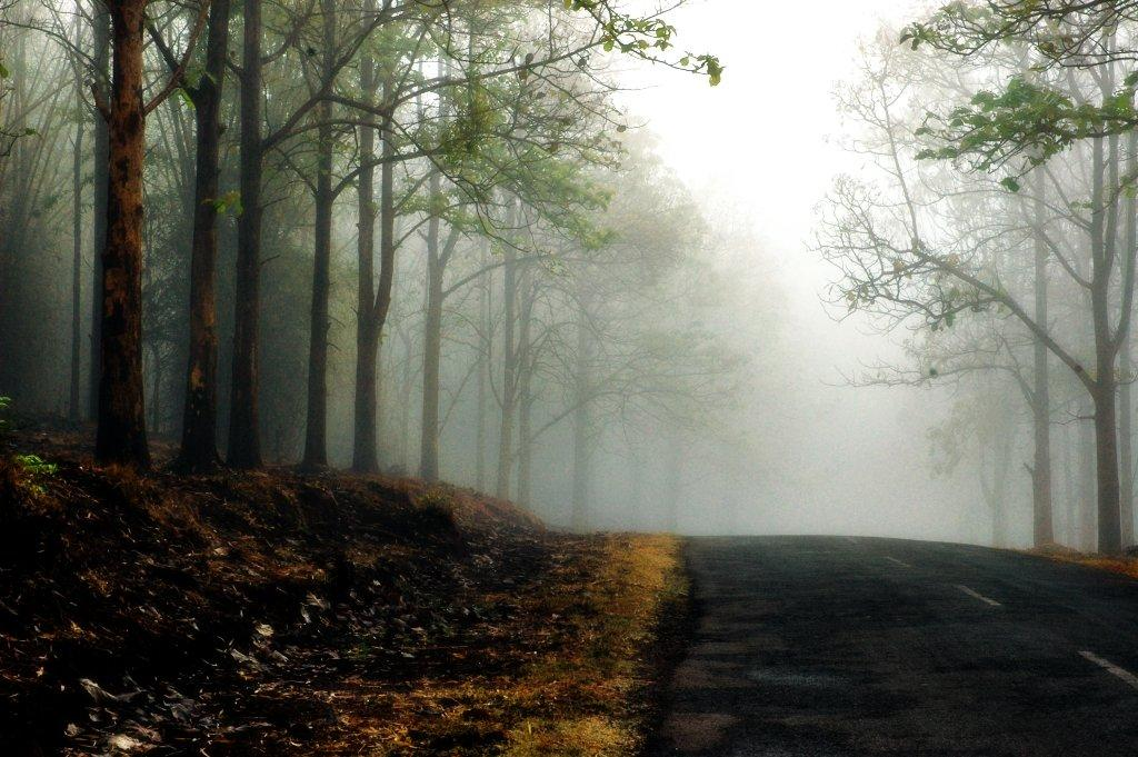 English: Fog in Wayanad