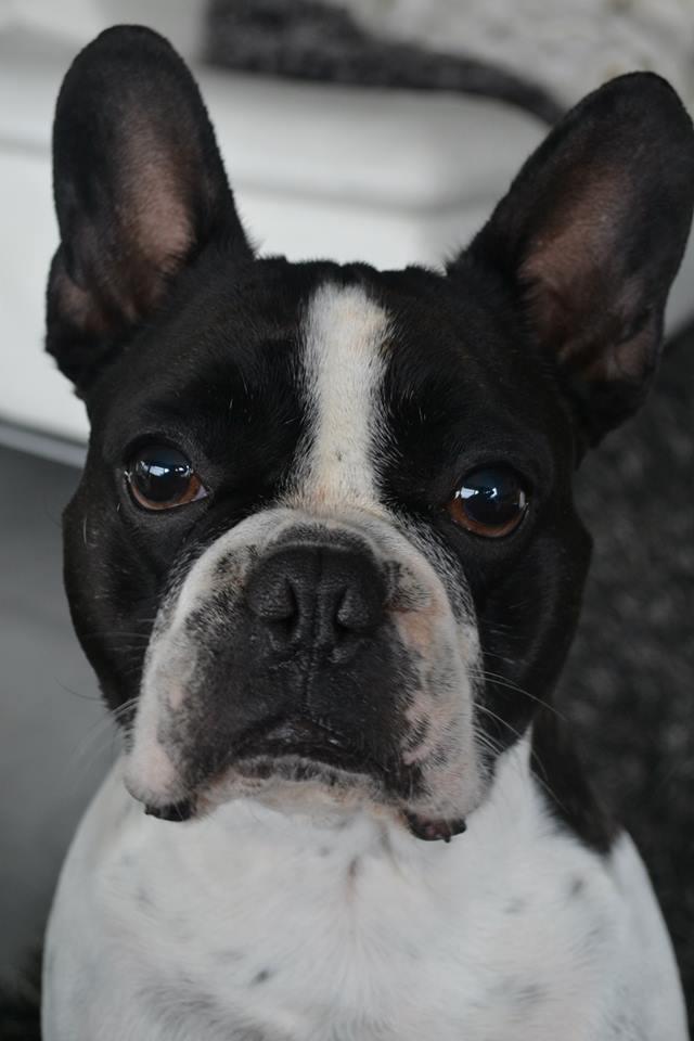 Craigs List Dog For Adoption In Spokane Wa