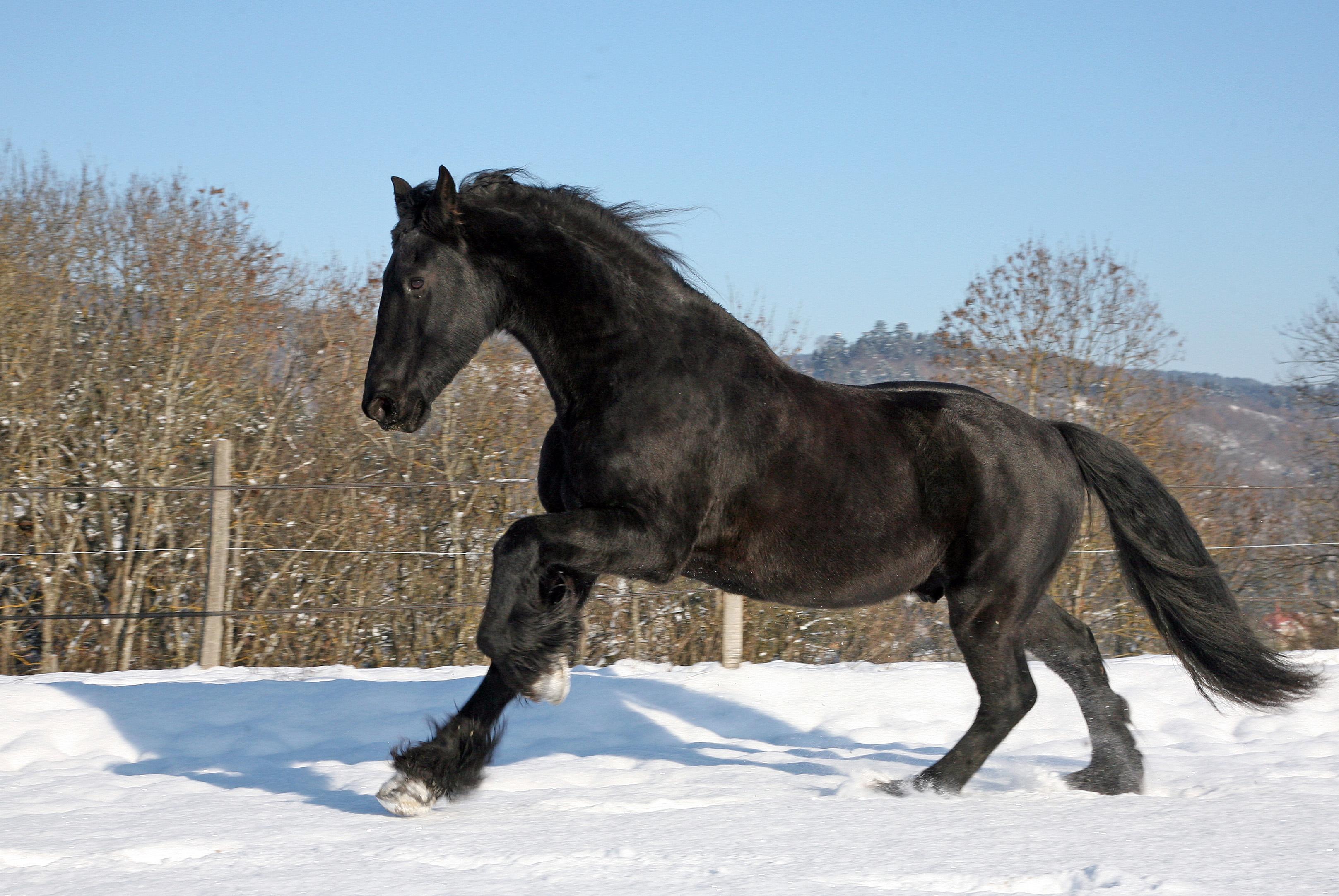 Black Horse Legend Wikipedia