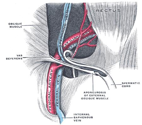 Allatto di trattamento gemorroidalny i coni è aumentato