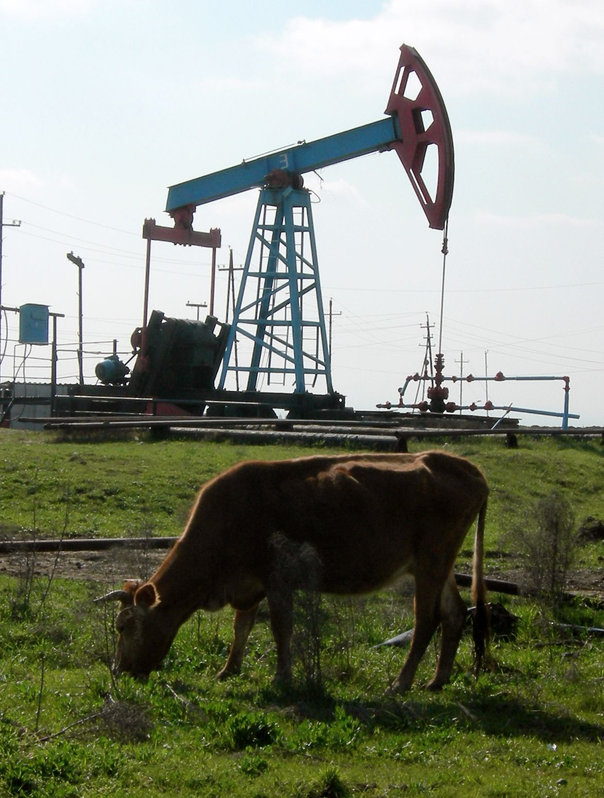 A cow and an oil well show two different economic systems