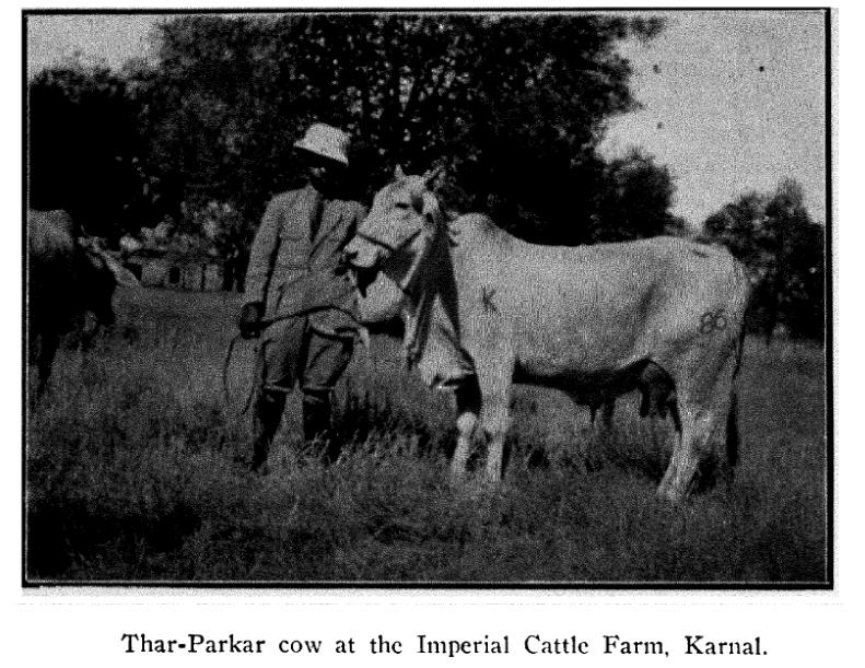 imperial cattle farm 1927