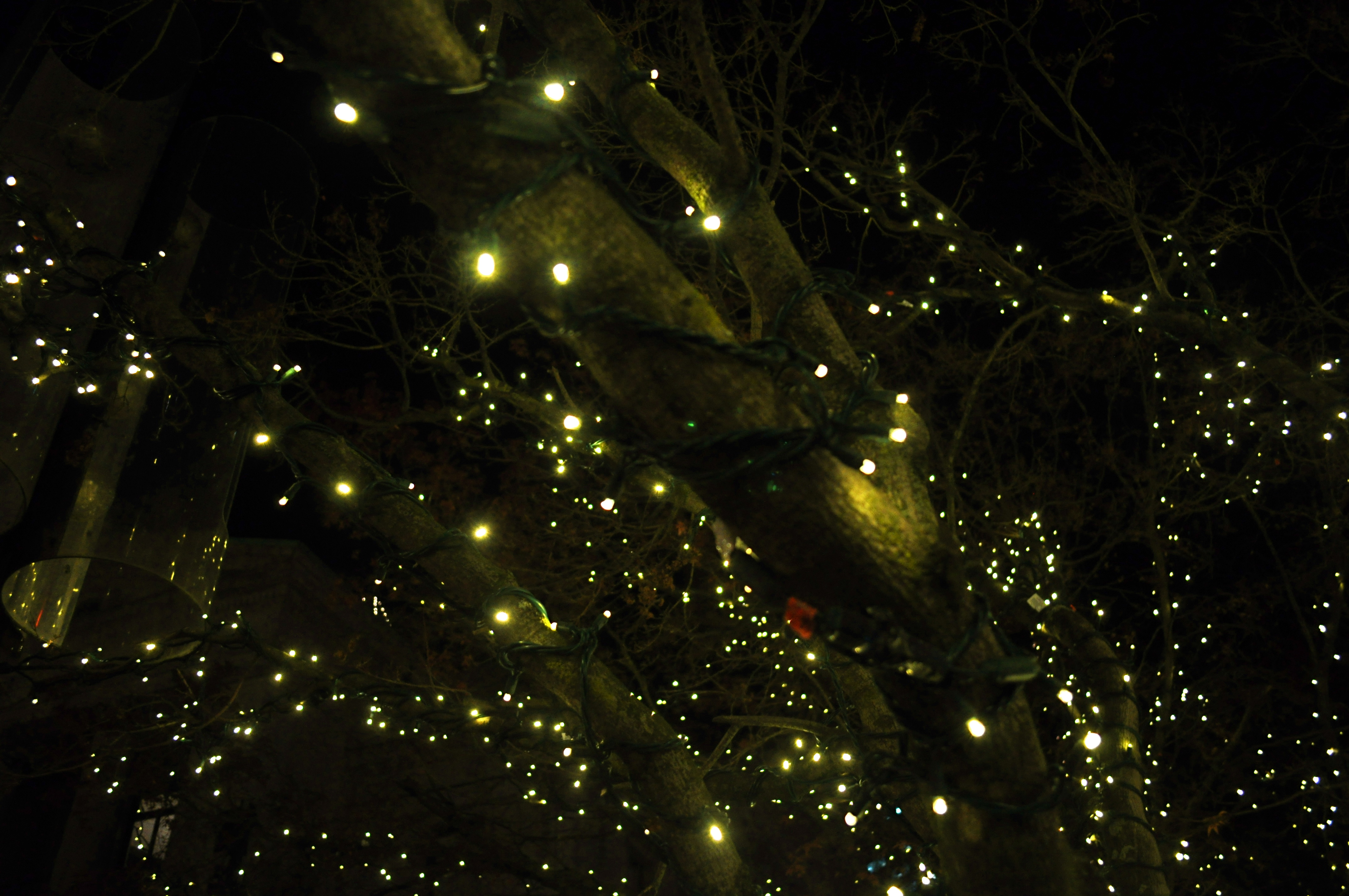Lights For Christmas Tree In Middle Of Room Batery