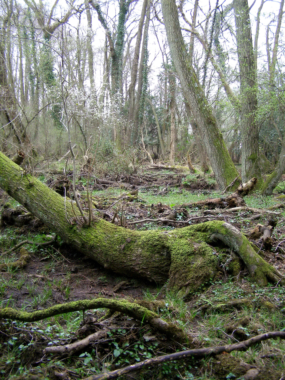 SplashClan's Camp Matley_bog_near_kings_passage