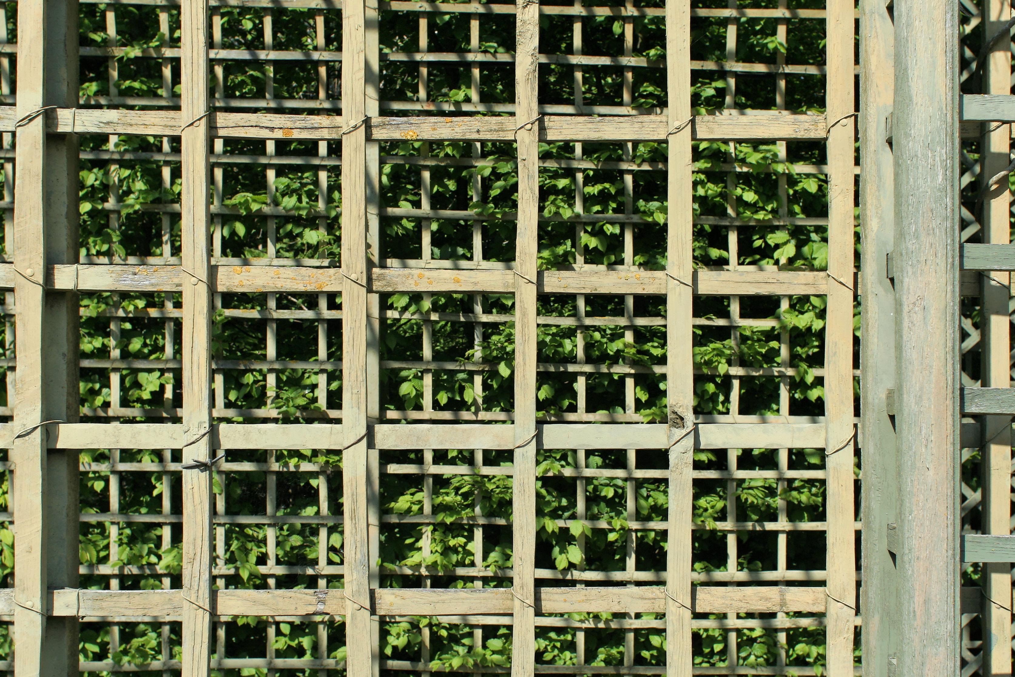 Fabriquer Treillis Bois Pour Plantes Grimpantes treillage — wikipédia
