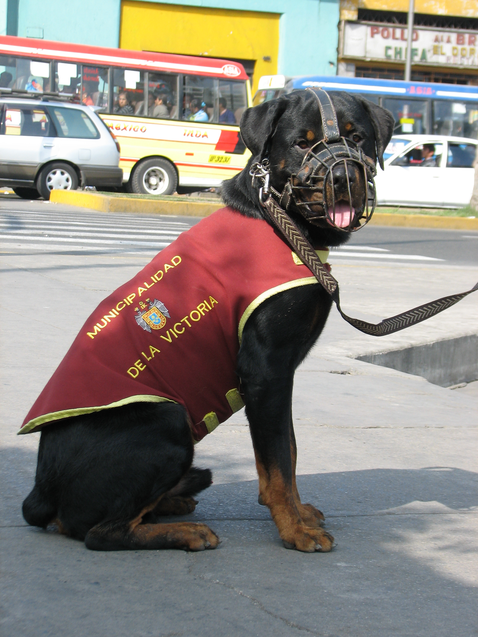 https://upload.wikimedia.org/wikipedia/commons/2/2a/Police_dog_Peru_Lima_La_Victoria_Plaza_Manco_C%C3%A1pac.jpg