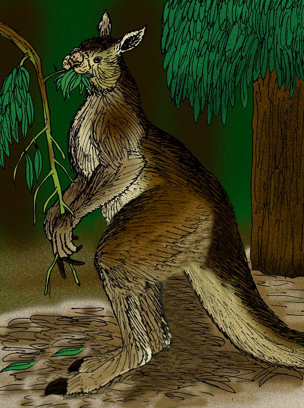 Procoptodon Wikipedia