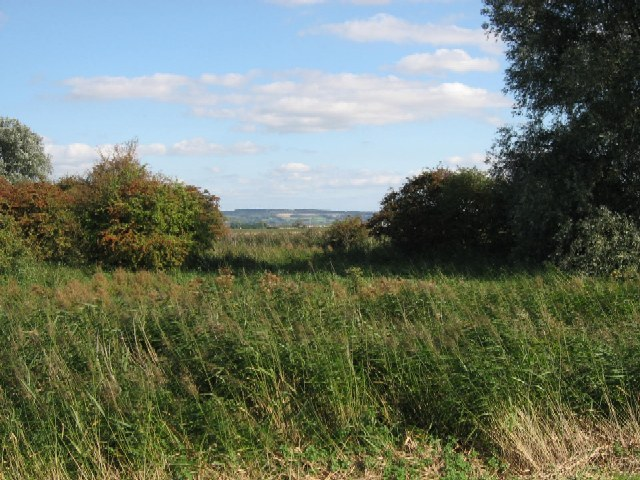 Reeds, Wood And Wold - geograph.org.uk - 250291