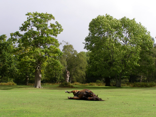 Rolling pony at Denny Wood campsite, New Forest - geograph.org.uk - 251589