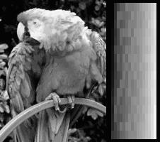 Ekrana kolortesto VGA 256colors mono.png