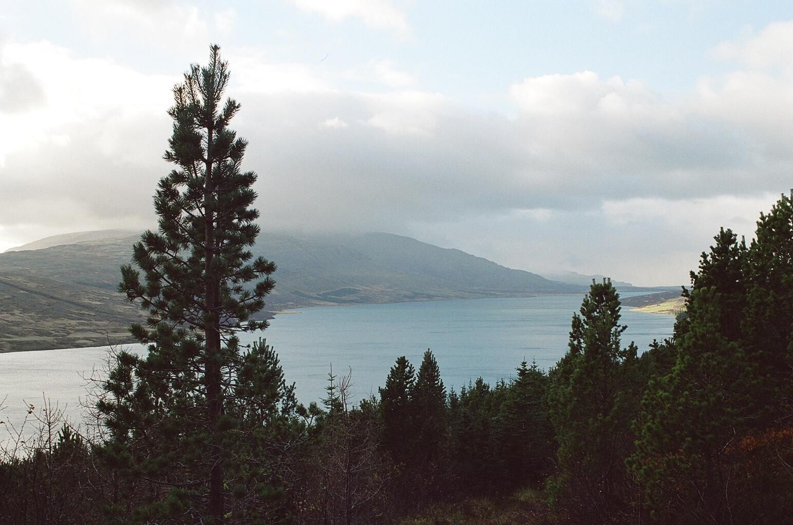 Waldpflanzungen am Skorradalsvatn