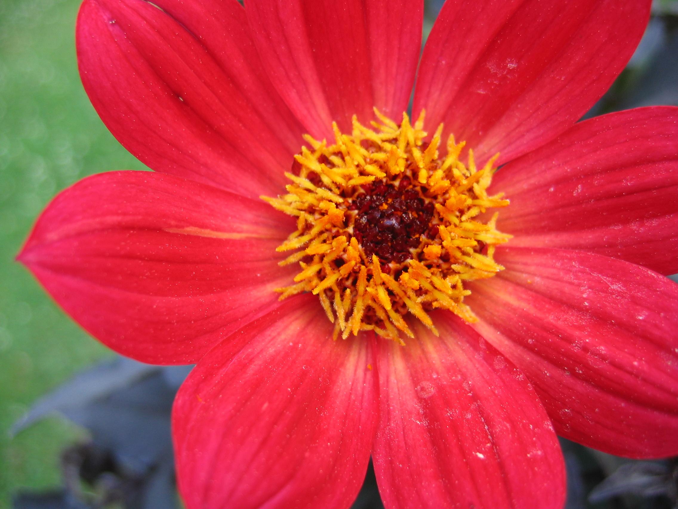 Summer Flower  Images ...