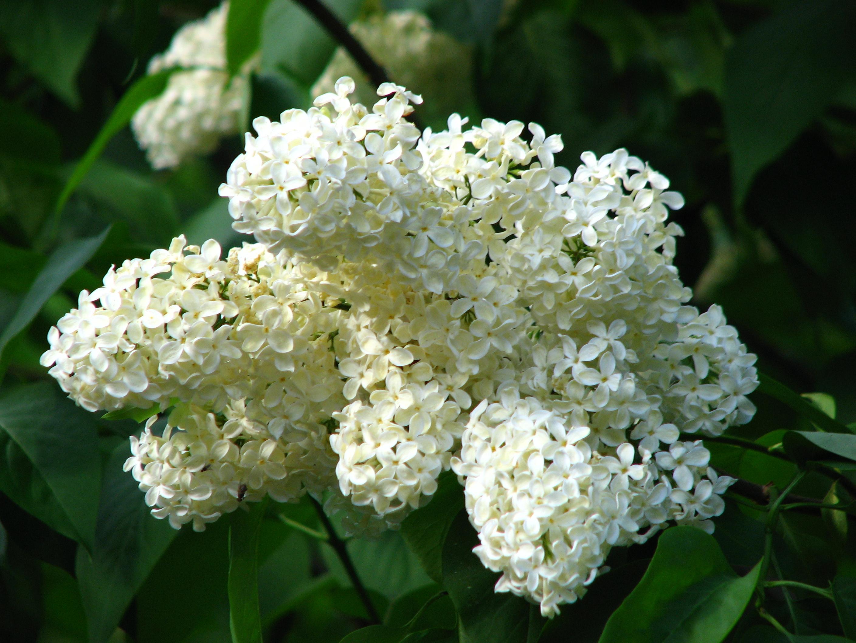 White Flower With Black Center