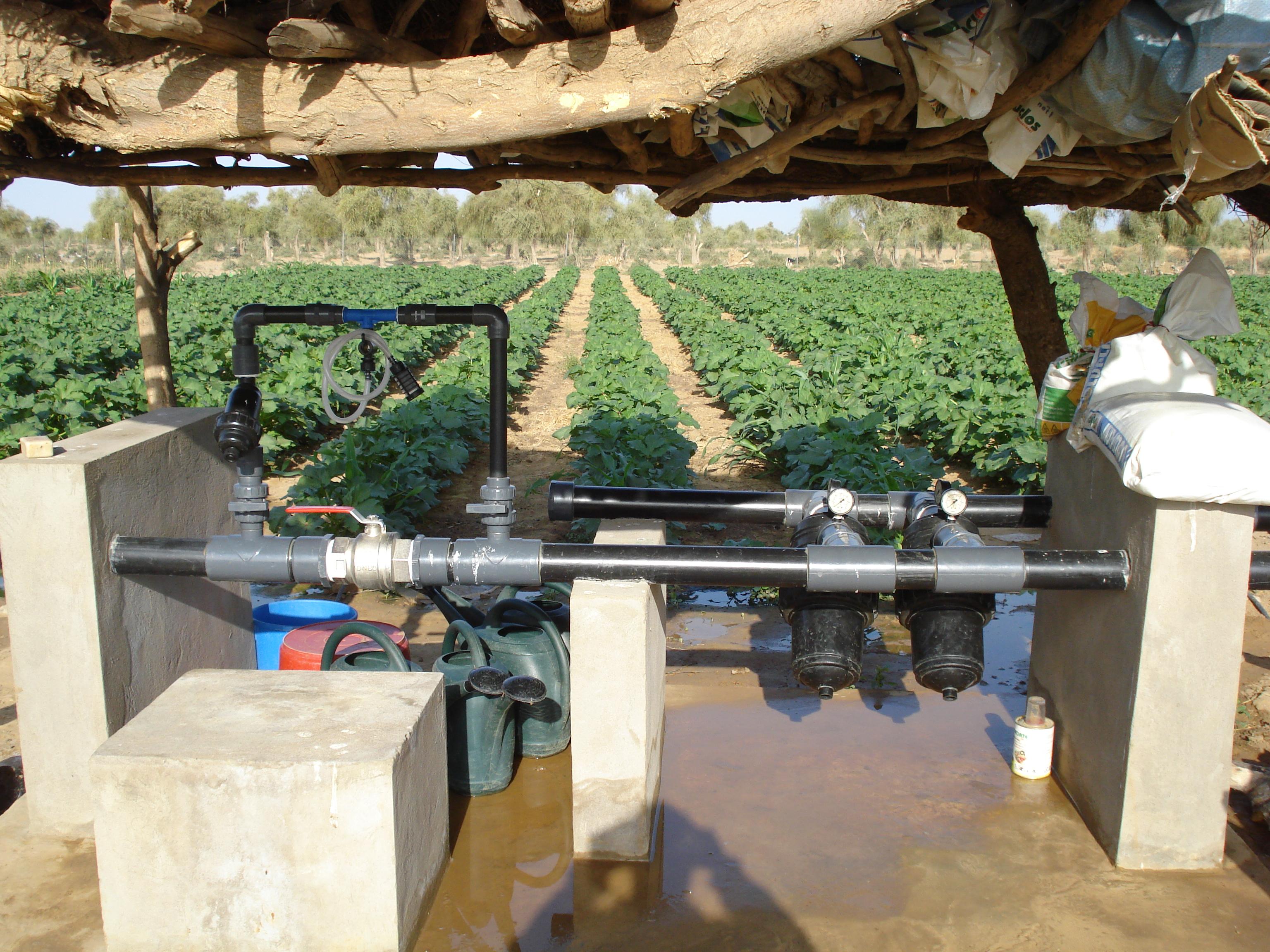 File syst me d 39 irrigation de goutte - Irrigation goutte a goutte ...