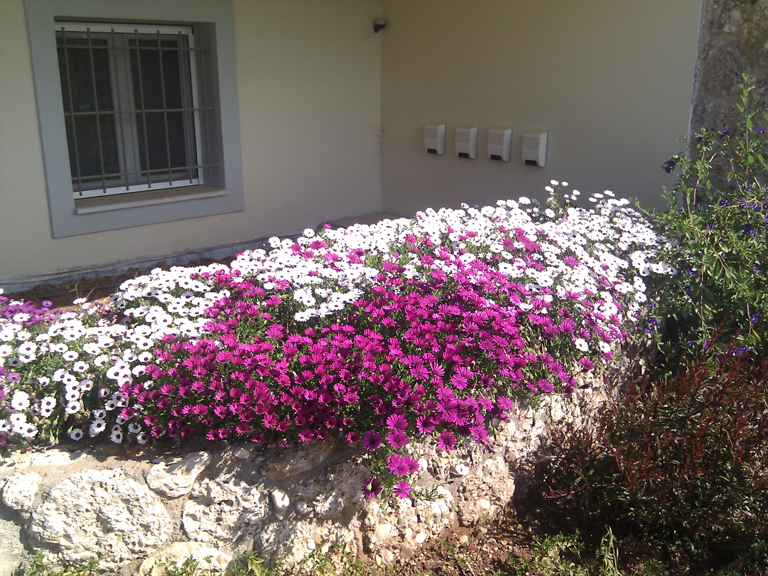 Filetolle Blumen überall Panoramiojpg Wikimedia Commons