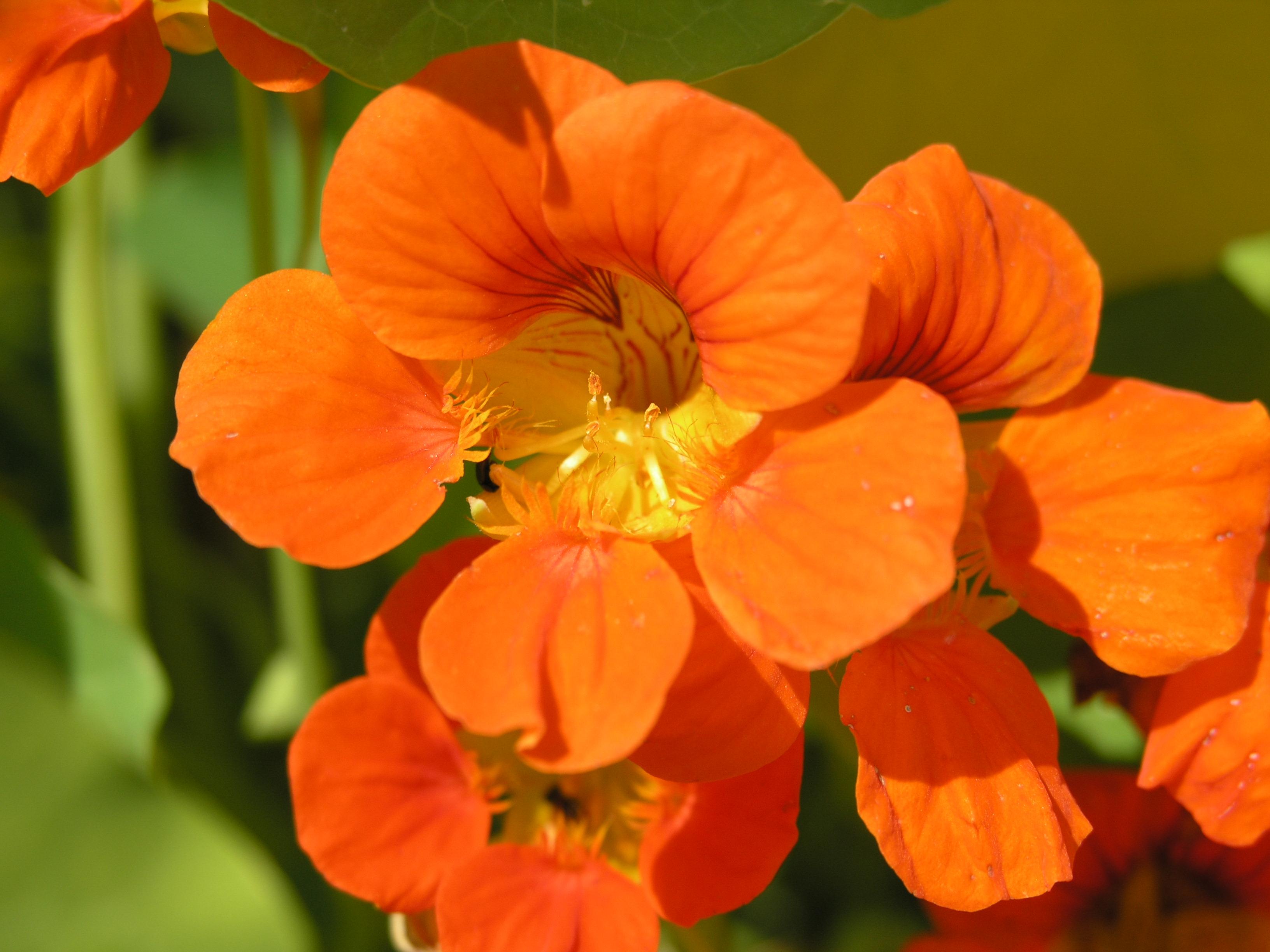 Цветы фото и описание выращивания