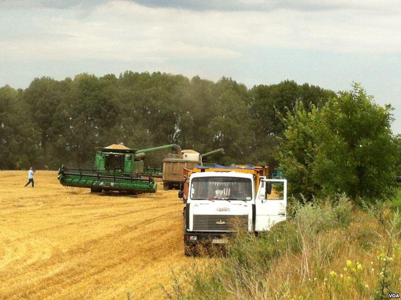 File:Ukranian wheat harvest.jpg