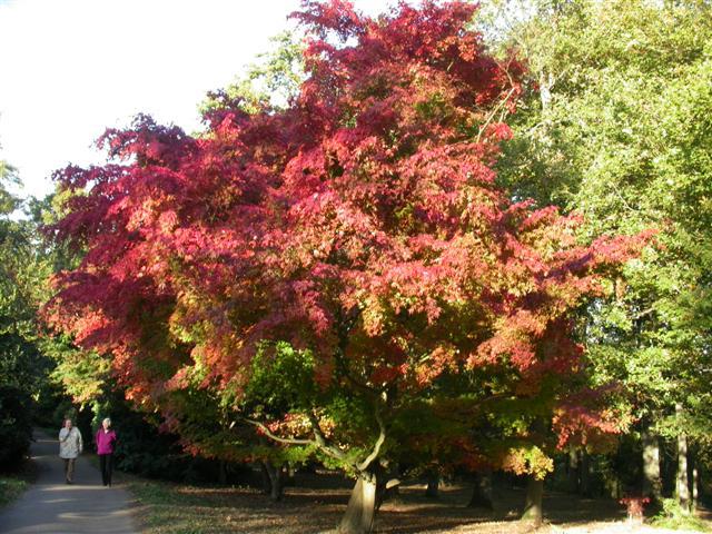 Winkworth Arboretum - geograph.org.uk - 2826