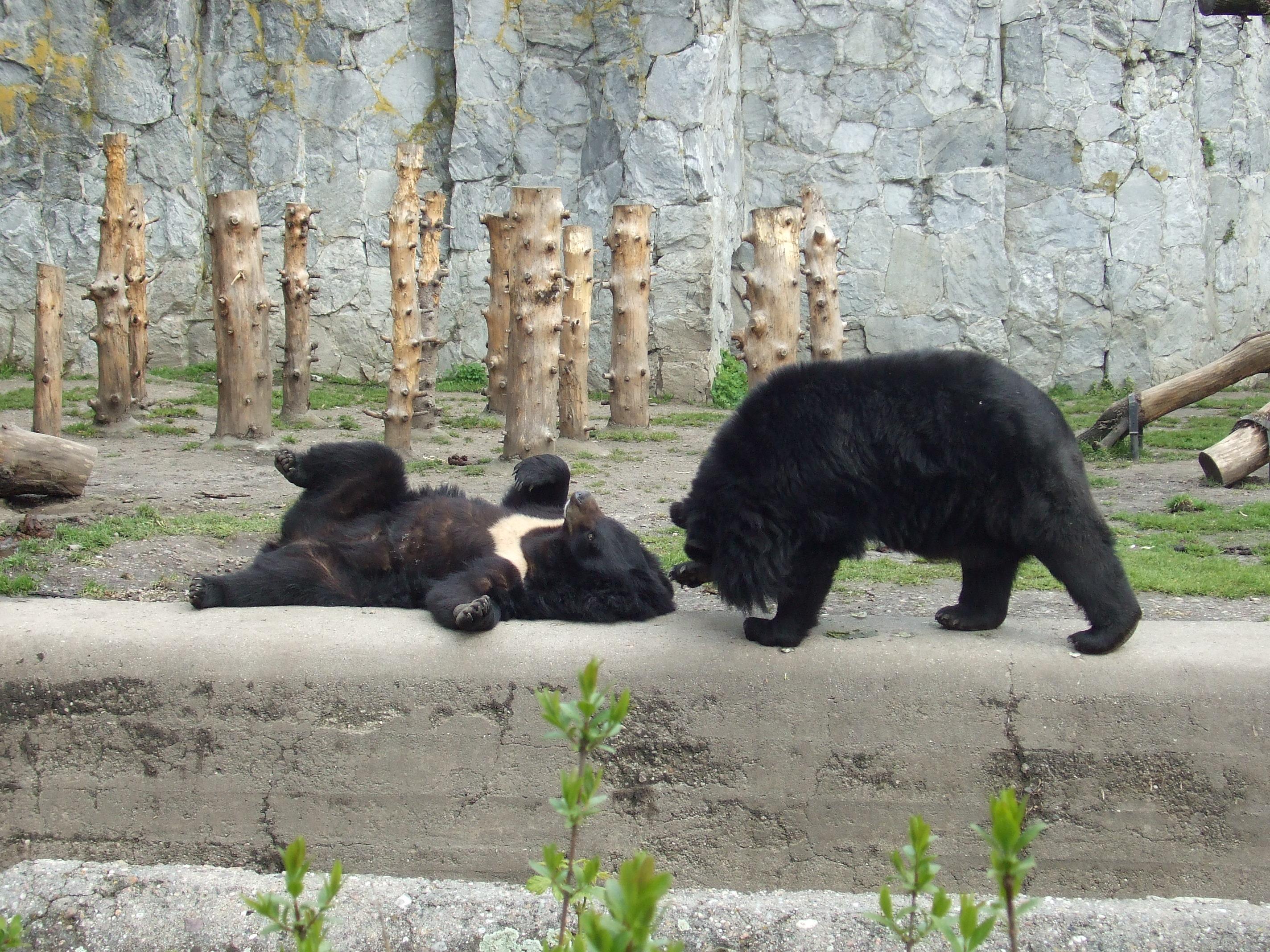 Filewrocław Ogród Zoologiczny Jpg Wikimedia Commons