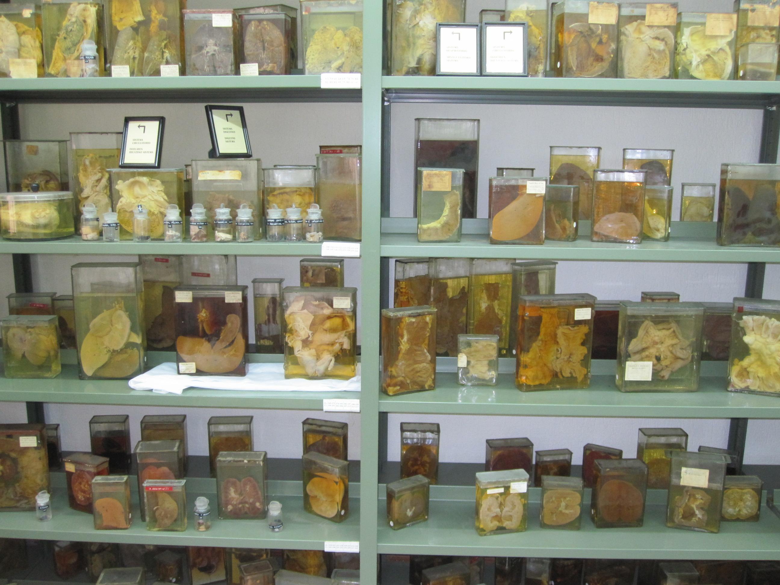 File:7.- Pathological Anatomy Room.jpg - Wikimedia Commons